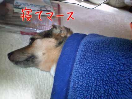 寝てマース