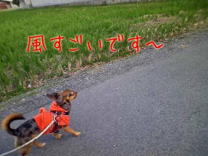 風すごいです~