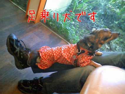 足乗り犬です