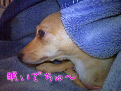 眠いでちゅ~
