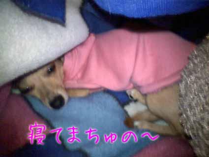 寝てまちゅの~