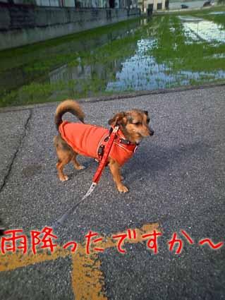 雨降ったですか~