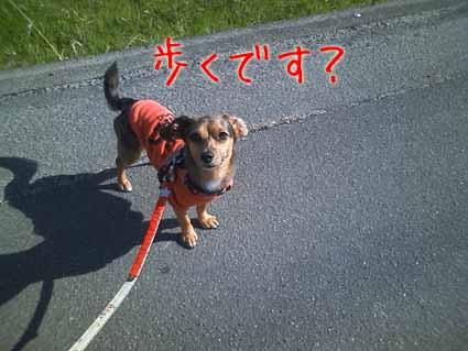 歩くです?
