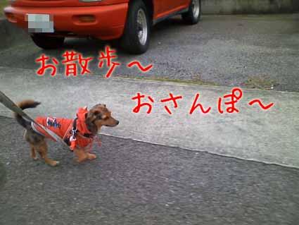 お散歩~おさんぽ~