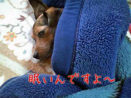 眠いんですよ~