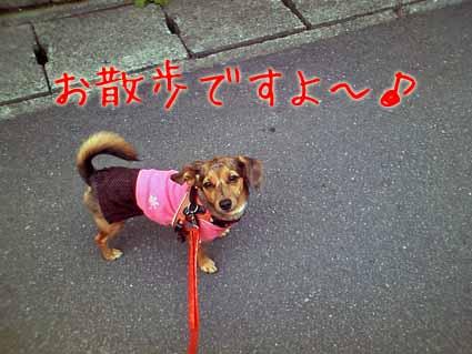 お散歩ですよ~♪