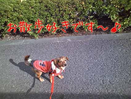 お散歩好きです~♪