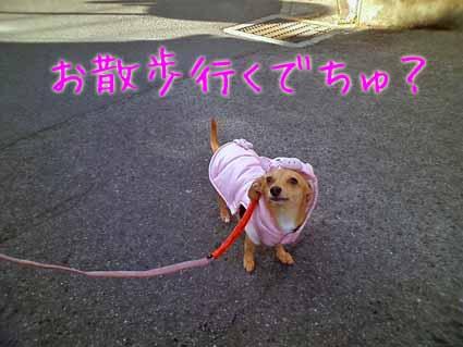 お散歩行くでちゅ?
