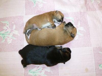 3頭の仔犬たち(1)