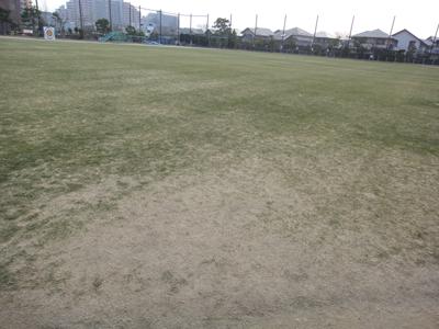 2011.2.3芝生の状況 001