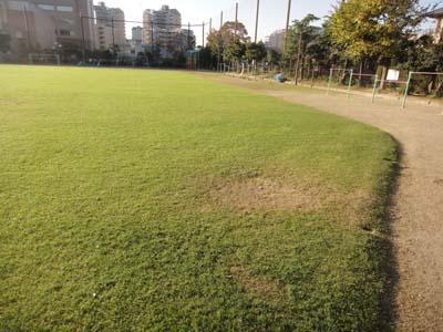 2011.11.26芝生メンテ 010