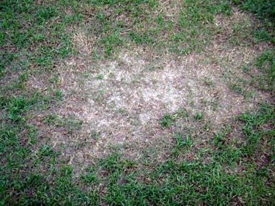 2011.12.3芝生の状況 004