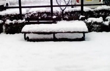 雪がコンモリ