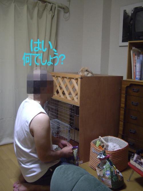 1_convert_20090916172820.jpg