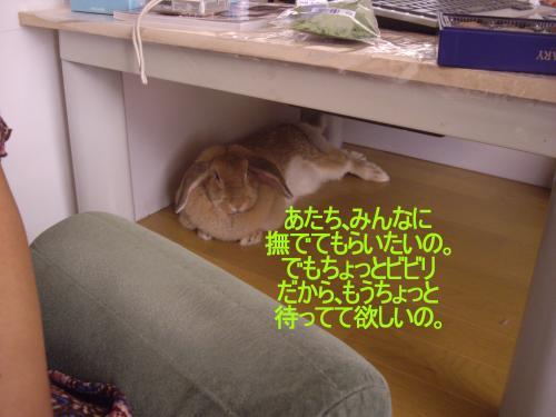 IMGP2105_convert_20090905201032.jpg
