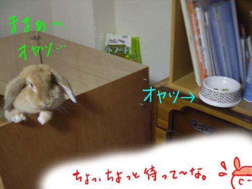 IMGP2792_convert_20091012202356.jpg