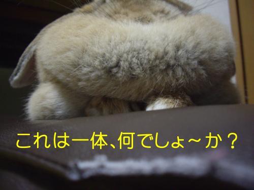 IMGP3412_convert_20091208201915.jpg