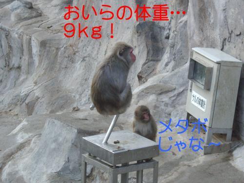 IMGP3643_convert_20091227015427.jpg