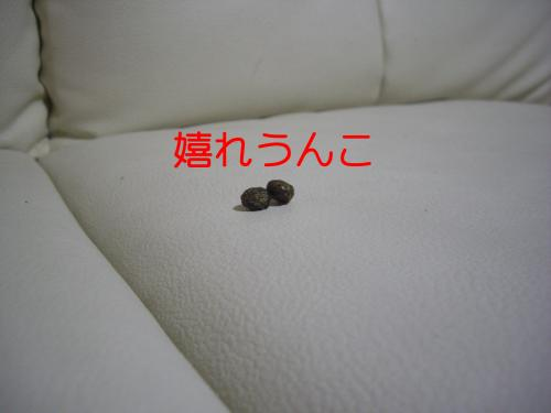 IMGP3675_convert_20100104010648.jpg