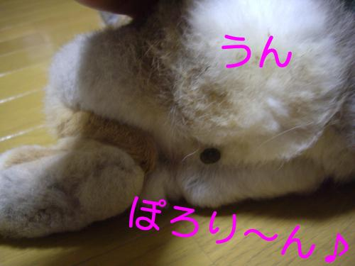 IMGP4019_convert_20100201231911.jpg