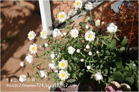 花かんざし2
