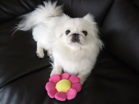 flower_momo.jpg