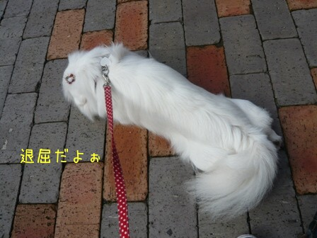 gotenba_03.jpg