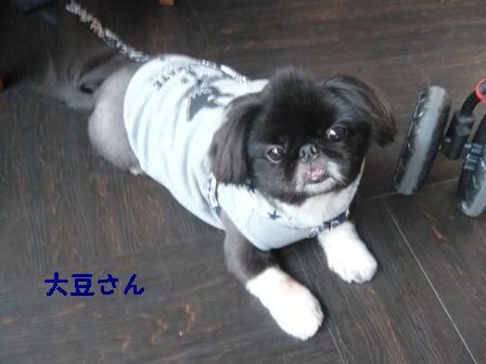 lala_daizu.jpg