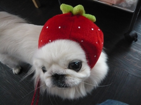 lala_momo_berry.jpg