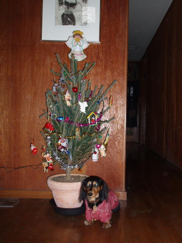 2008クリスマス 023
