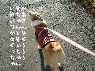 12.1散歩