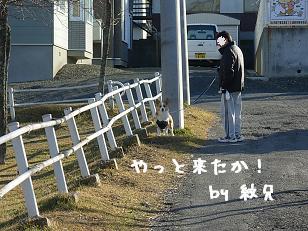 12.1散歩 紋兄