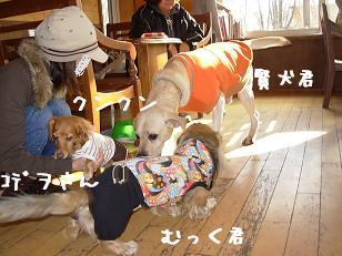 12.6ジプシーおでこ&むっく&賢犬