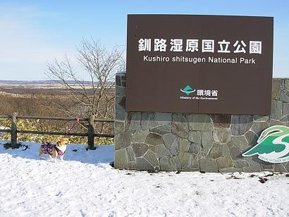 12.13湿原展望台 杏