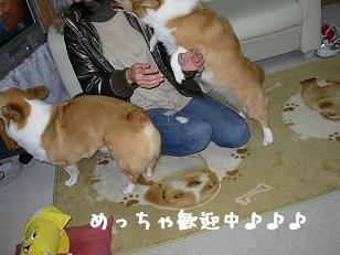 12.14なぽちゃんとコーギーズ