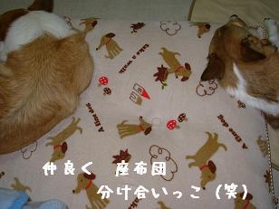 長座布団 紋兄&杏