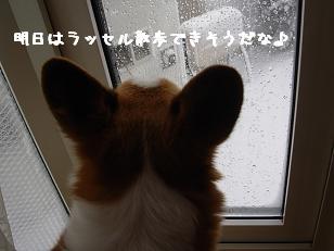 出窓眺め 紋兄