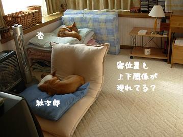 お昼ね 紋&杏