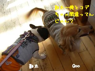2.1ジプシー勘太&Qoo