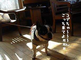 2.1ジプシー勘太