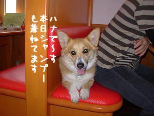 ワンダフル ハナちゃん