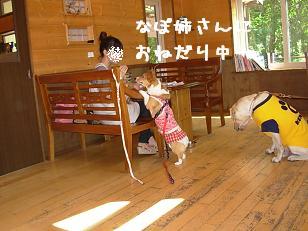 8.1なぽちゃんと杏