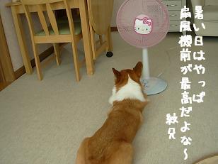 扇風機前紋兄