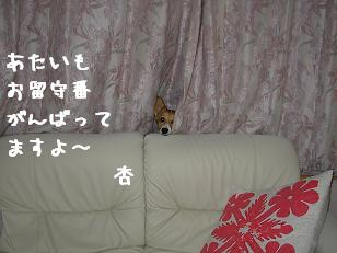 カーテンから杏