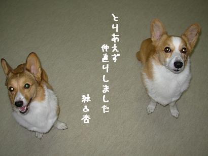 9.10 紋&杏