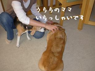 うららママ&杏