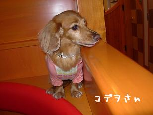 10日ワンダフル(おでこ)