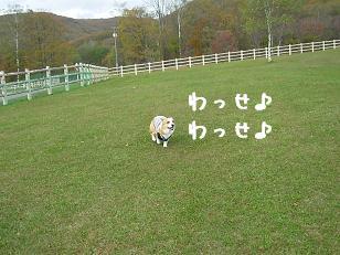 かけっこランド紋兄3
