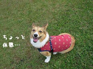 かけっこランド杏3