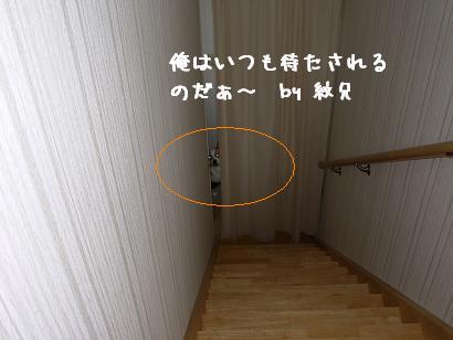 階段下 紋兄